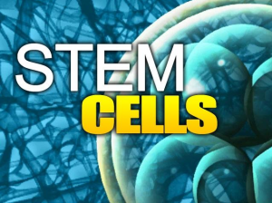 Stem Cells Los Angeles