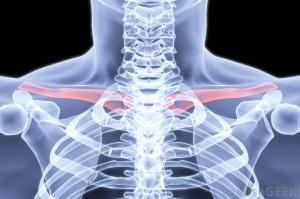 human-collarbone